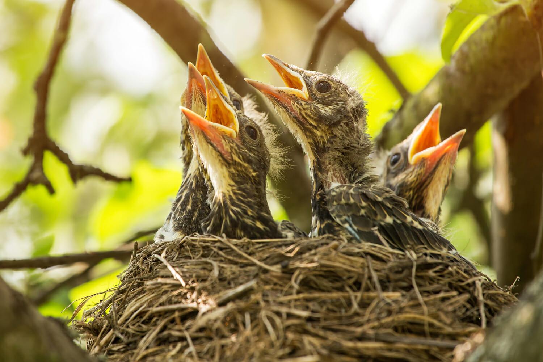bird-nesting-divorce-custody